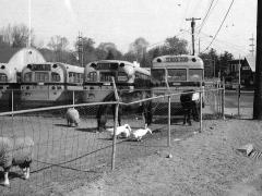 Peter Brega Inc. Farm 1970